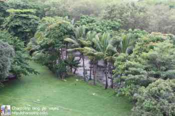 selva-panama-viejo