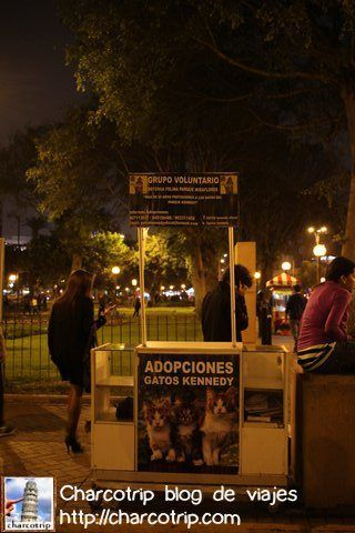 stand-aopcion-gatos-kennedy