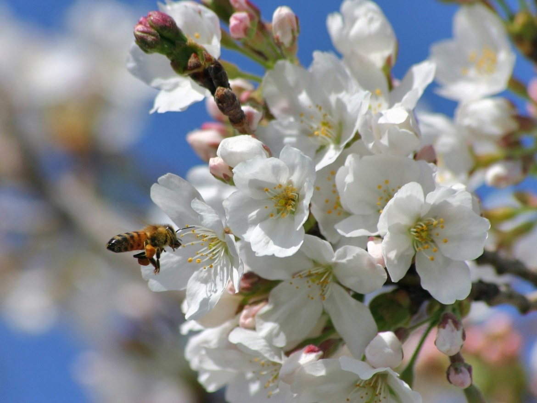 springtime, bees & flowers