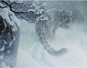 christmas-greeting-card-leopard-by-d.r.-laird.jpg