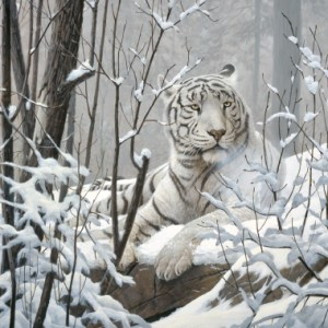 christmas-greeting-card-white-tiger-by-d.r.-laird.jpg