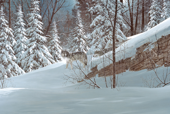 christmas-greeting-card-wolf-by-d.r.-laird.jpg