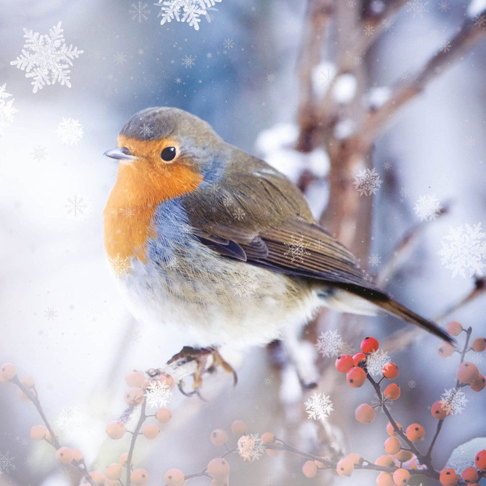 Winter Robin Christmas Card Charity Cards