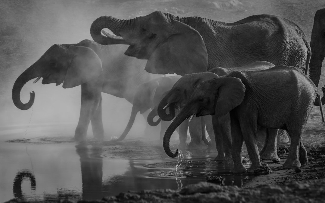 Elephant Culture, Giving Up Social Media, and What's over the Horizon