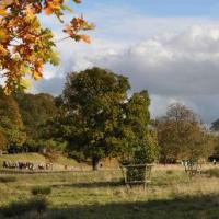Walks in Charlecote and beyond