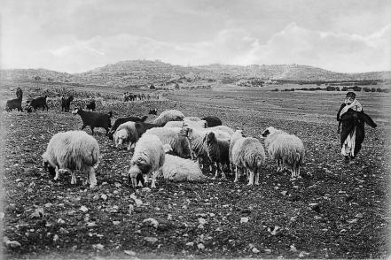 Shepherds' Fields east of Bethlehem
