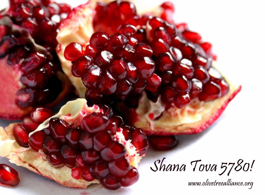 5780 Shana Tova_Olive Tree Alliance_pom