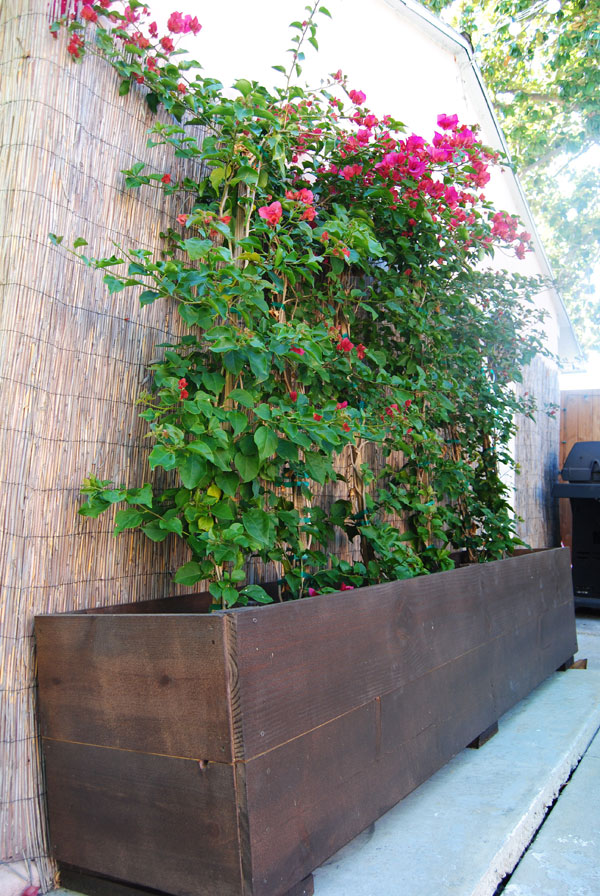 bougainvillea-planter-box.jpg