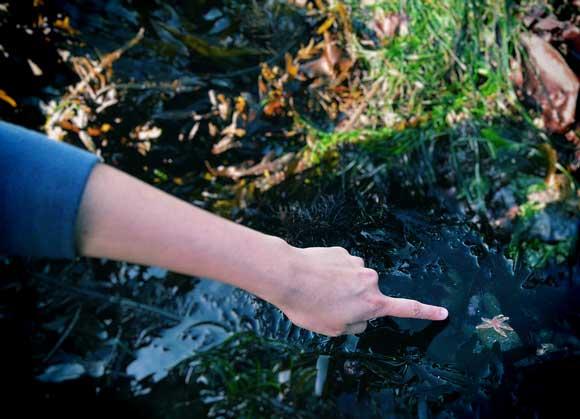tidepools-starfish.jpg