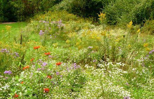 backyard-meadow