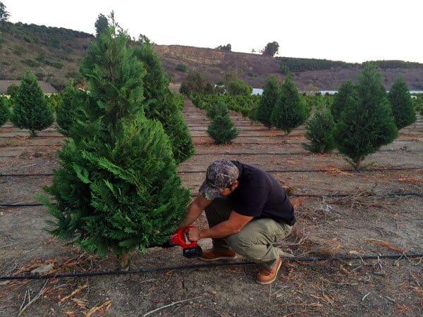 cutting-your-christmas-tree-sawzall