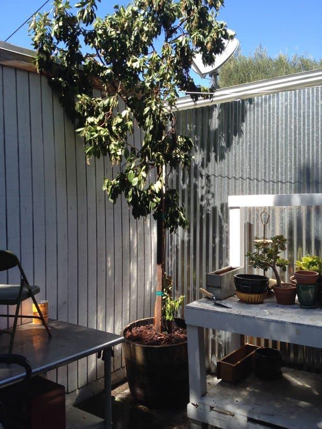 whiskey-barrel-planter-tree