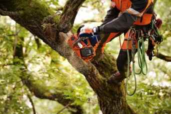 Arborist working with battery top handle chainsaw - T536Li XP