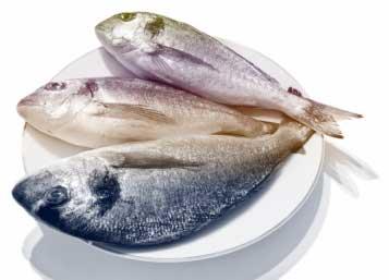 fishlent