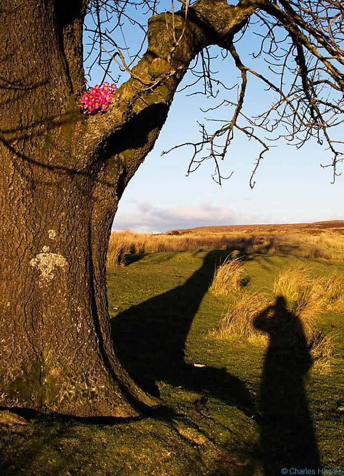 Flowers in tree: a roadside memorial near Blaenavon, photographed by Charles Hawes. Walking in Wales.