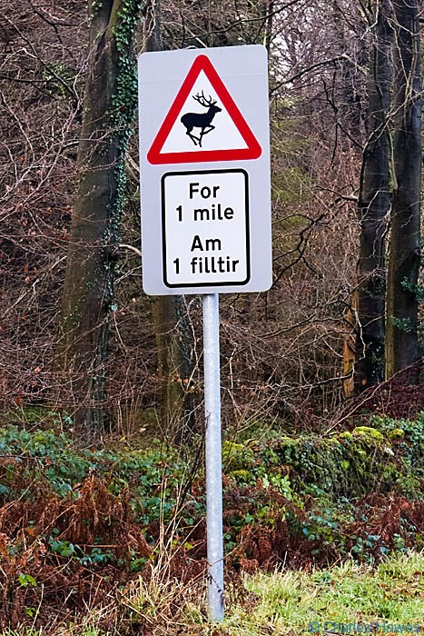 Road sign warning of deer photographed by Charles Hawes