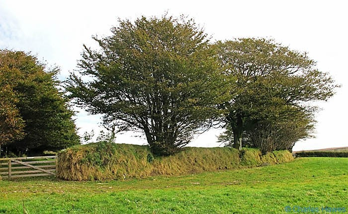 Grass covered field boundary bank with beech trees in Exmoor, photographed by Charles Hawes. Walking in Exmoor.