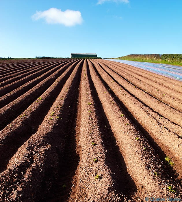 Ploughed fields with potatoes on Angle Bay, Pembrokeshire, on The Wales Coast Path, photographed by Charles Hawes
