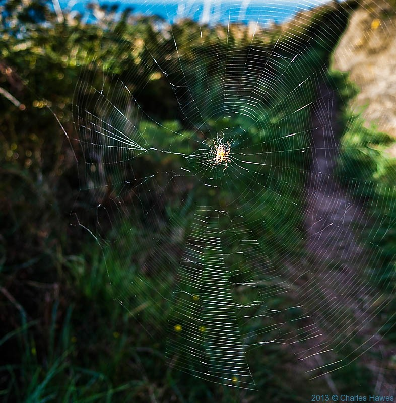 Spiders web across trhe Wales Coast path, photorgraphed by Charles hawes