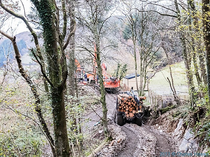 Forestry working in Carreg Wood photographed by Charles Hawes