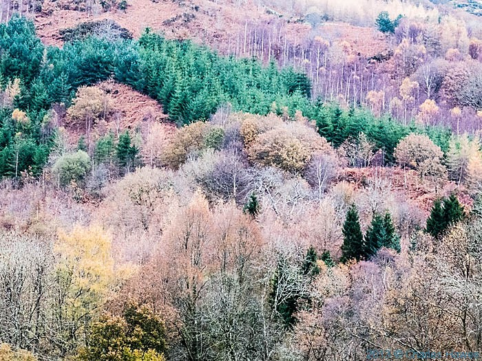 Mixed woodland near Machynlleth photographed from The Wales Coast Path by Charles Hawes
