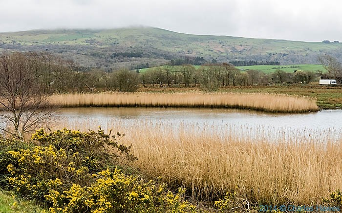 Reed-edged pond near Ynys, photographed from The Wales Coast path by Charles Hawes