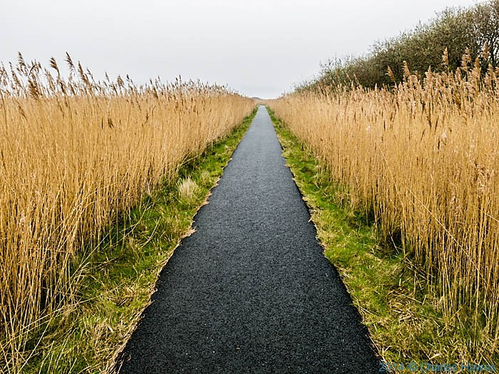 Reed-lined Wales Coast Path near Shell Island, photographed by Charles Hawes
