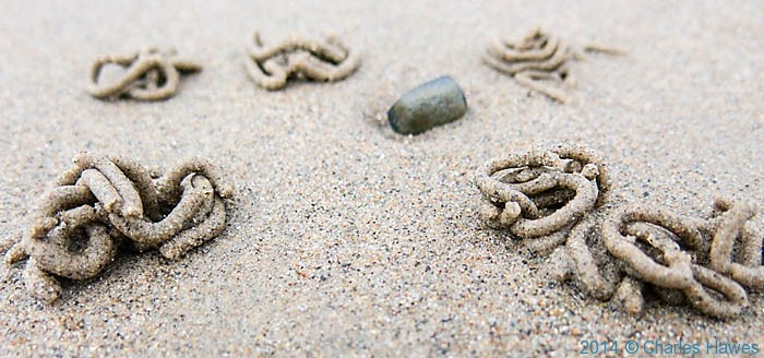 Worm casts on sandy beach on the Lleyn peninsula, photographed by Charles Hawes