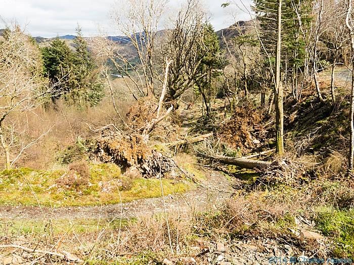Wales Coast Path blocked by trees in Storm damage in Coed Felinrhyd, Gwynedd, photographed  by Charles Hawes