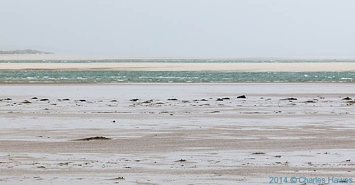 Black Rock Sands, Lleyn penisula, photographed from The Wales Coast Path by Charles Hawes