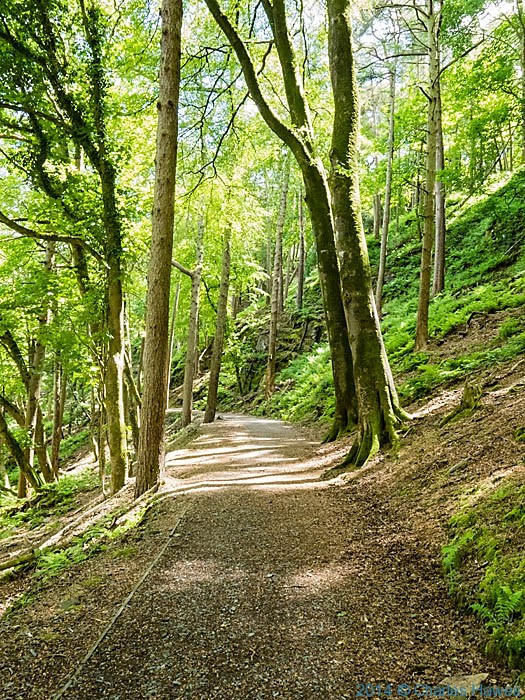 Woods of the Plas-Glyn - y weddw estate, photographed from The Wales Coast Path by Charles Hawes