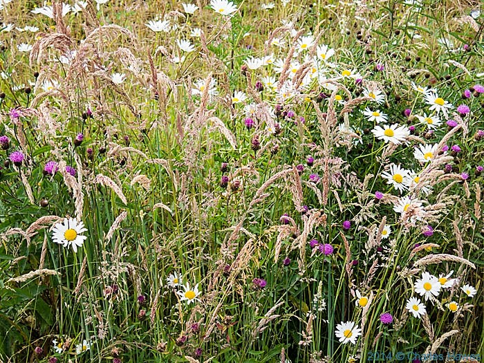 Roadside verge by the A499 photographed from The Wales Coast Path by Charles Hawes