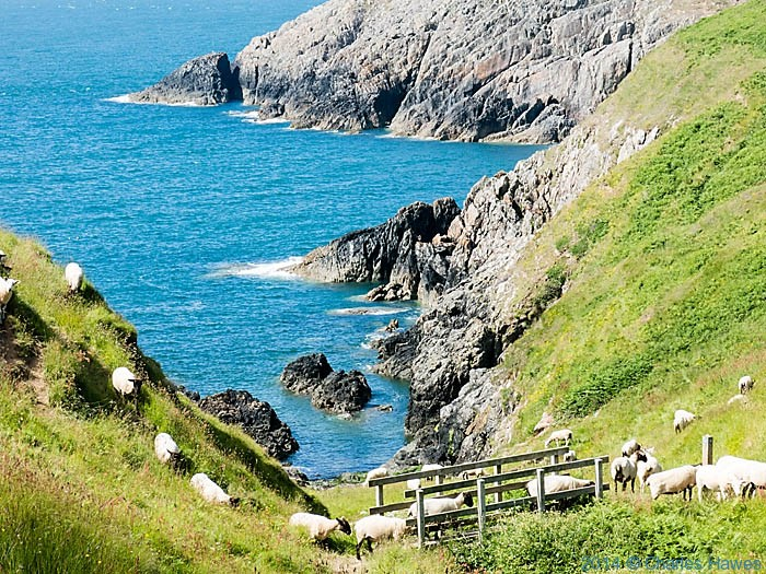 Footbridge at Porth Llanllawen, photographed from The Wales Coast Path by Charles Hawes