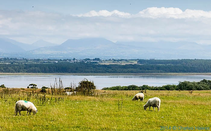 View across the Cefni estury photographed from The Wales Coast Path by Charles Hawes