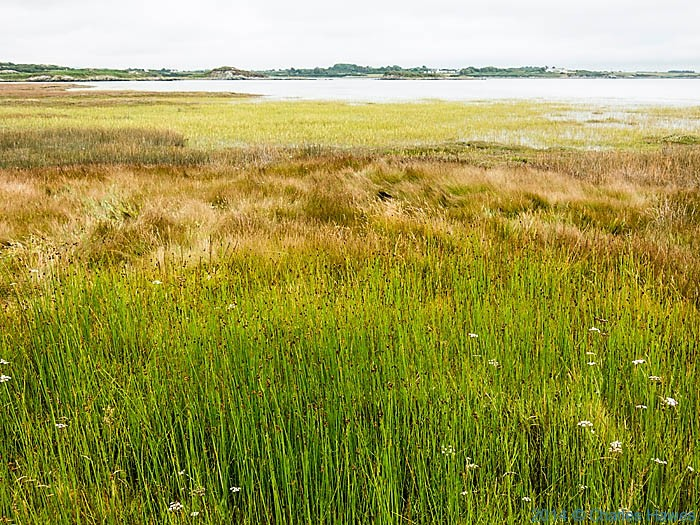 Marshland near Four Mile Bridge, Anglesey, photographed from The wales Coast Path by Charles Hawes