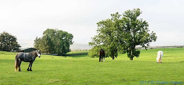 Field near Ravenstonedale, photographed by Charles Hawes