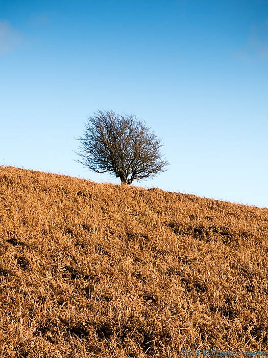 Tree and bracken on Sugar Loaf, near Abergavenny, photographed by Charles Hawes