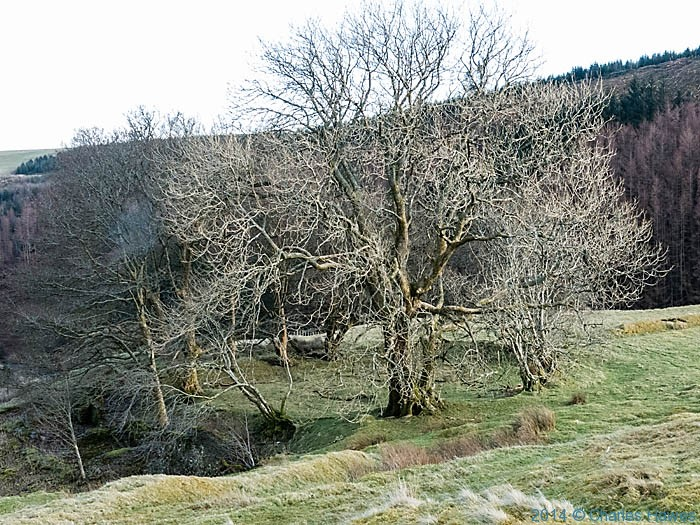 Hillside above the Afon Clywedog, Powys, photographed by Charles Hawes