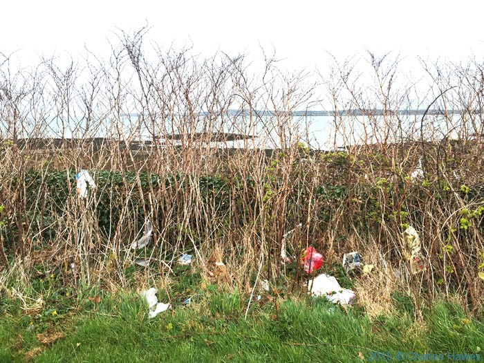 Rubbish in the hedgerow at Morawelon, Anglesey, photographed from The Wales Coast Path by Charles Hawes