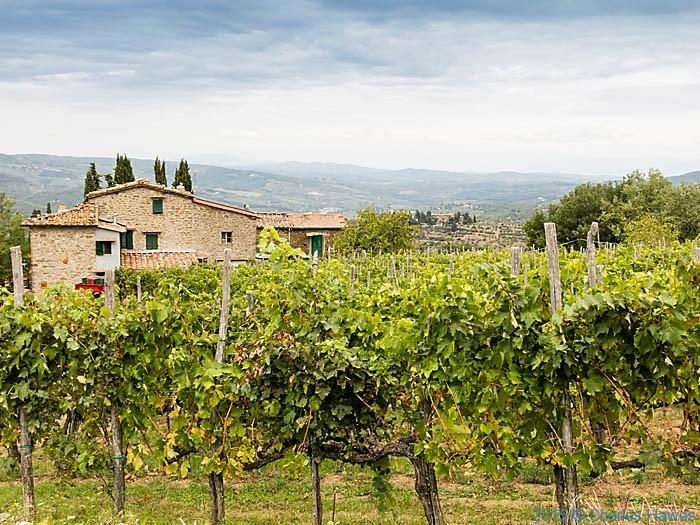 Vineyard at Lamole, Chianti, Tuscany, photographed by Charles Hawes