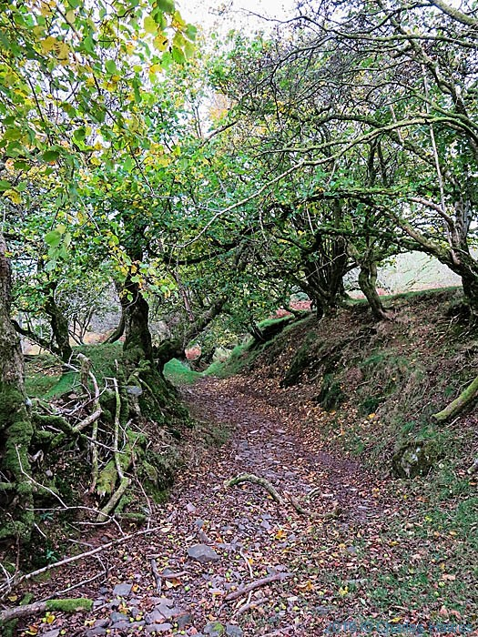 Hollow way near Llandeussant, Carmarthenshire, photographed from The Cambrian Way by Charles Hawes