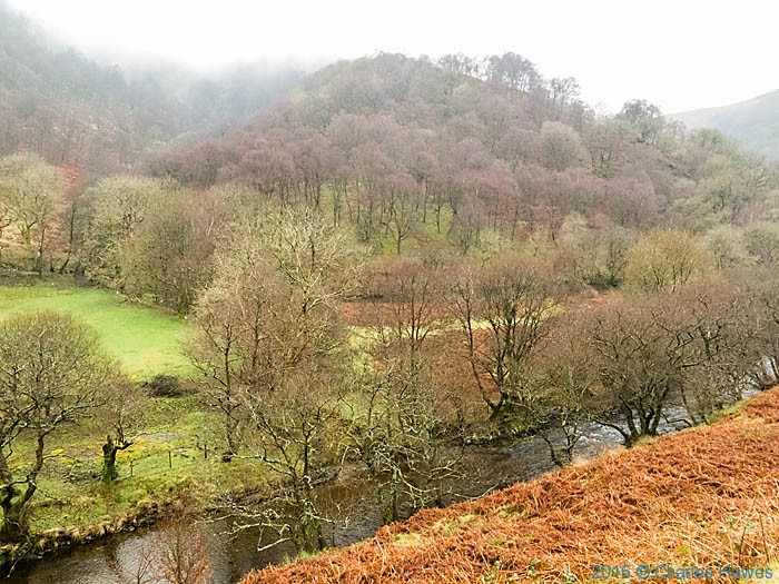 Woodland in the Doethie valley, Ceredigion, photographed from The Cambrian Way by Charles Hawes