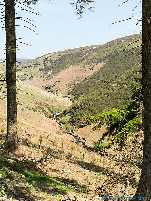 Gorge of the upper Ceiriog river, photographed by Charles Hawes