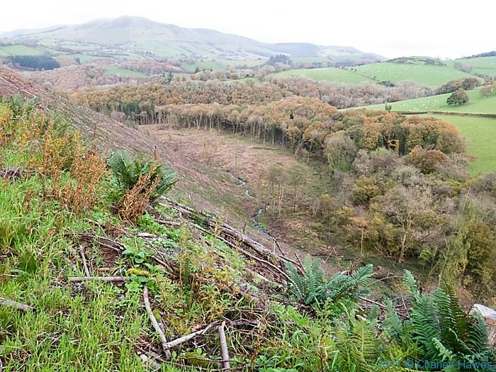 View from the Cambrian Way of Coed Bryneinion, near Commins Coch, photographed by Charles Hawes