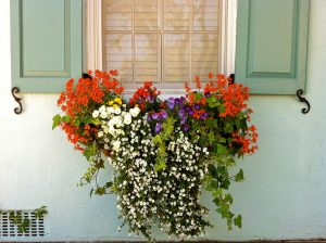 window-box-flowers-charleston-sc
