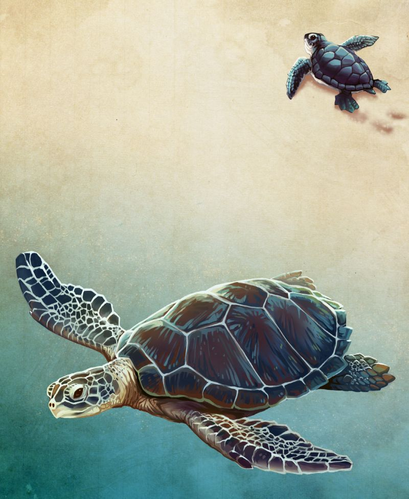 Images Long Head Sea Turtles