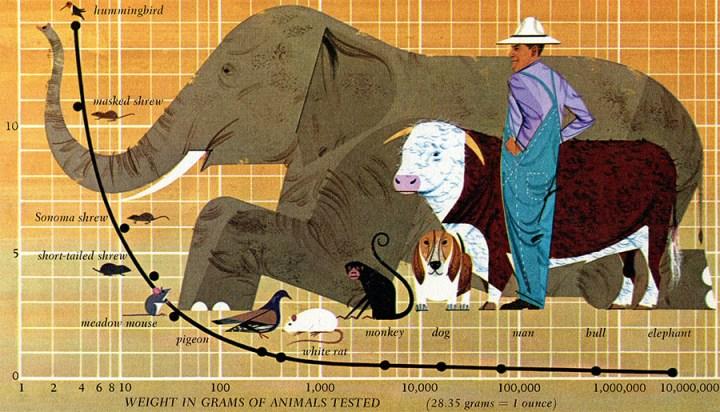 Bio Table | Charley Harper Prints | For Sale