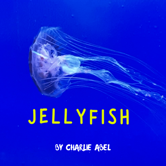 Jellyfish Album Art