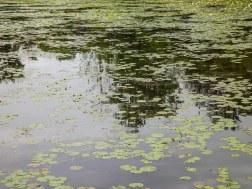 spring_valley_lake (1 of 1)
