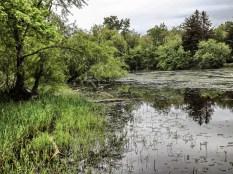 wetland3 (1 of 1)_Snapseed
